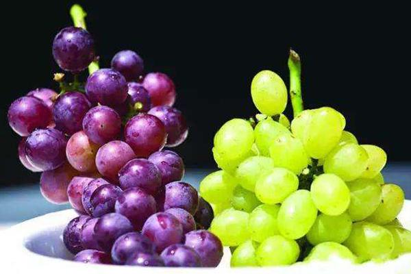 提子和葡萄的区别是什么