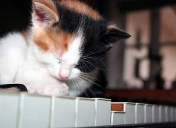 钢琴与电钢琴的区别