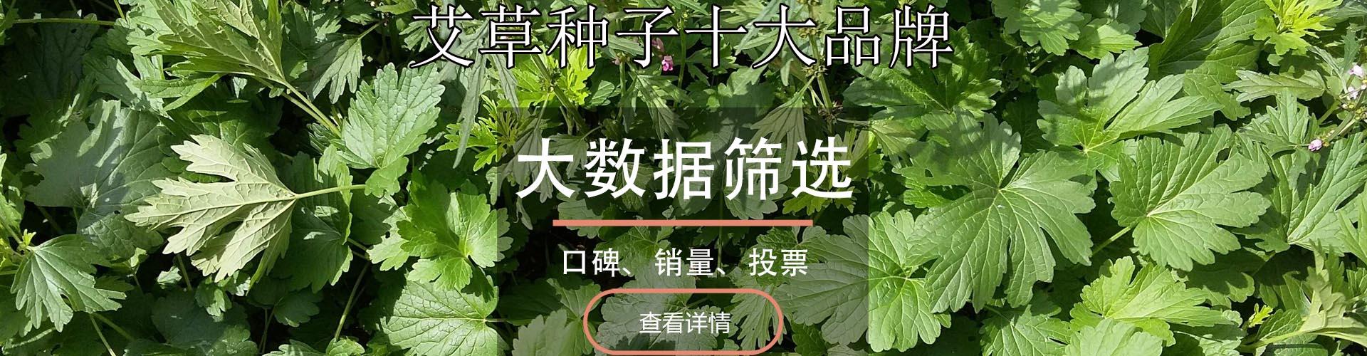 艾草种子十大品牌排行榜