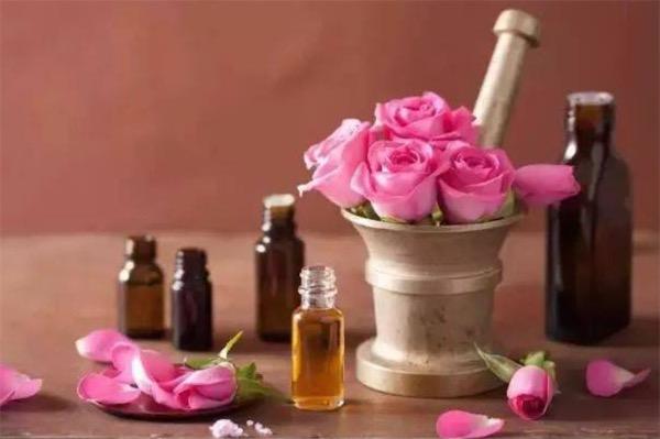 提取玫瑰精油的方法是什么