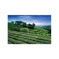 茶林十大品牌排行榜