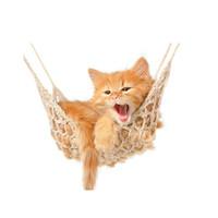猫吊床十大品牌排行榜